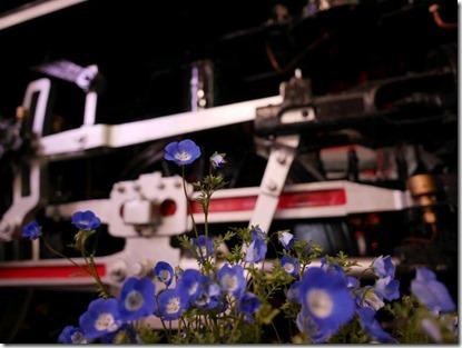 新橋SL前の春花