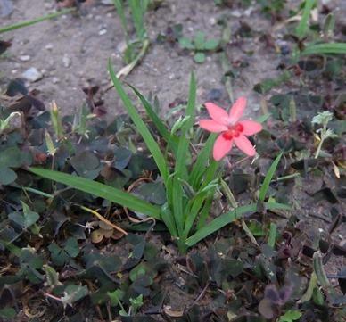 可憐な花[4]