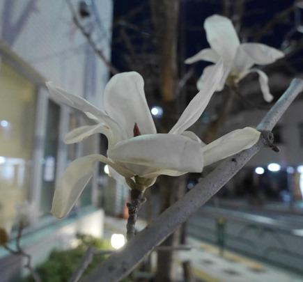 花びらバラバラ
