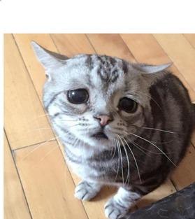 中国の情けない顔の猫さん