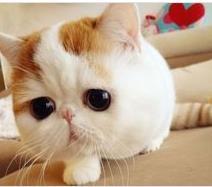 スヌーピーさん中国猫