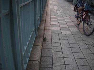 橋の上の小さい花