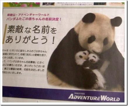 パンダの名前