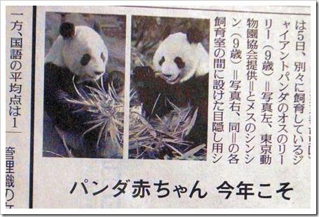 パンダのあかちゃん