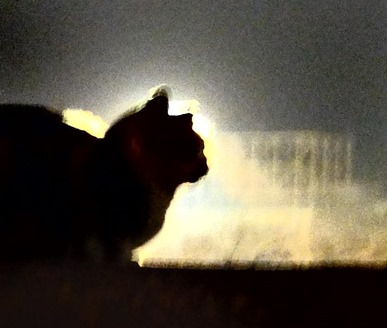 ネコの影絵