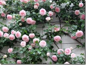 bara薔薇の花タナ