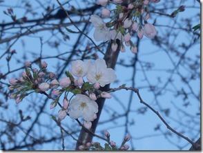 上にも咲いてます。