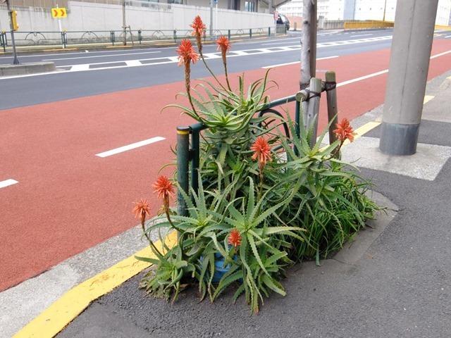道端の変な花