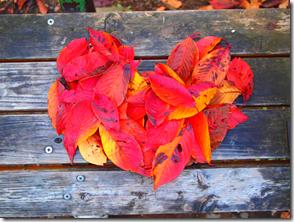 落ち葉のハート
