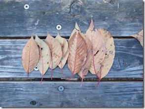 落ち葉の刺し身
