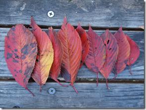 落ち葉で作るおさしみ