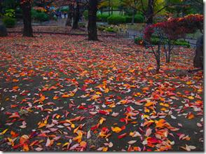 綺麗に撒かれた花びらのような桜の落ち葉