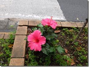 道端の大きな花