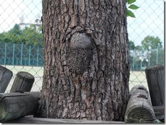 ヲームが木に