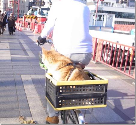 犬用タクシー