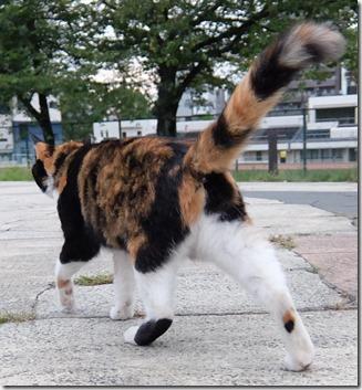 いっちゃう猫